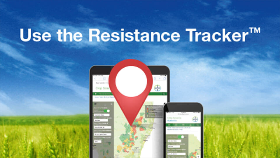 Check resistance in your area by using Resistance Tracker tool from Bayer Crop Science.