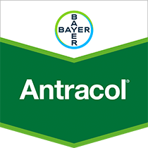 Antracol fungicide