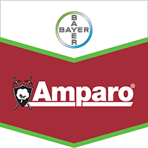 Bayer Amparo® Seed Treatment Insecticide