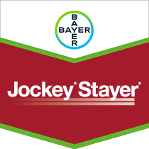 Jockey Stayer