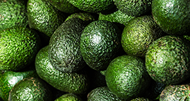 Serenade Prime Crop user guides for Avocados by Bayer
