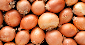 Serenade Prime Crop user guides for Onions by Bayer