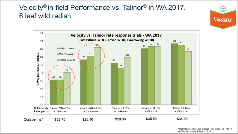 Velocity Talinor Trial Summary