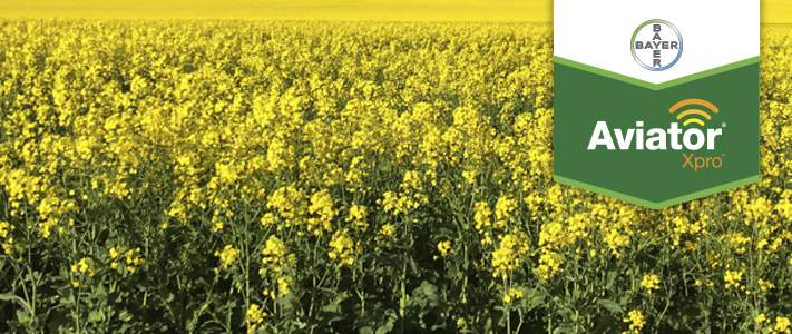 Launch of foliar fungicide, Aviator® Xpro® by Bayer for 2017