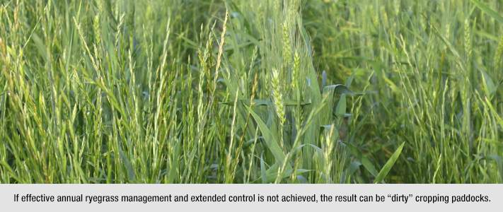 Annual ryegrass mgnt. & control by Bayer Crop Science