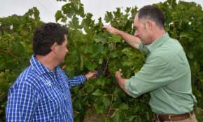 Article on Insect control for South East wine grape growers
