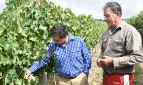 Scale & sooty mould posing challenges for grapegrowers