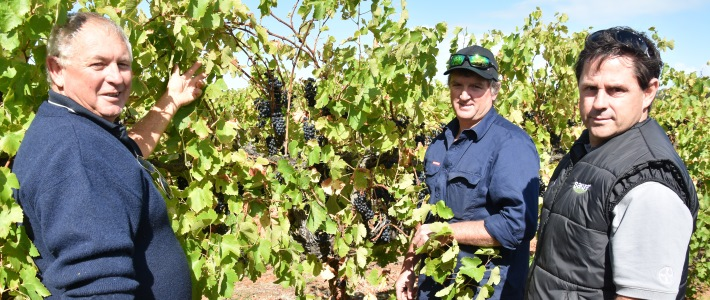 South Australian winegrape grower Andy Murdock