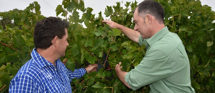 Insect control for South East wine grape growers