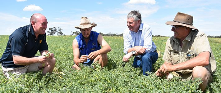 Chickpea crop disease control in action by team