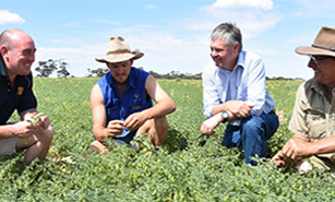 Team working on Chickpea crop disease control