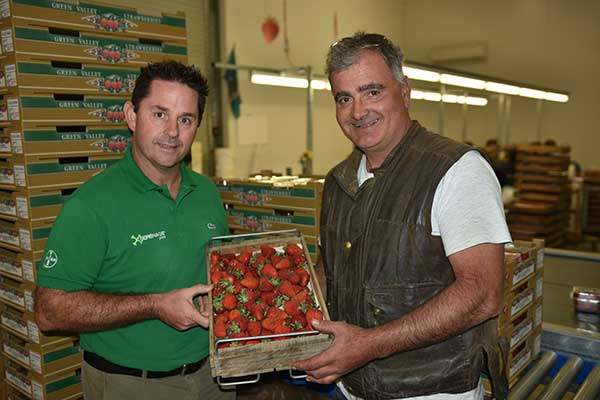 Bayer Commercial Sales Rep Darren Alexander & South Australian strawberry grower Jim Rozaklis