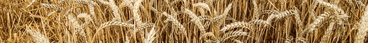 Grow cereals crops using Bayer products