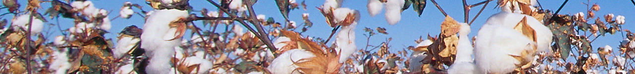 Harvest high-quality cotton using Bayer products