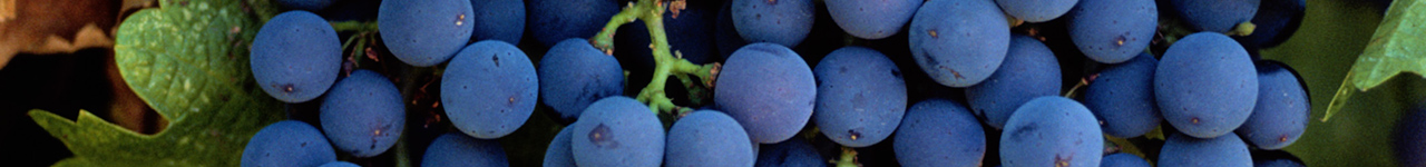 Bayer crop products for Grapes growers in Australia